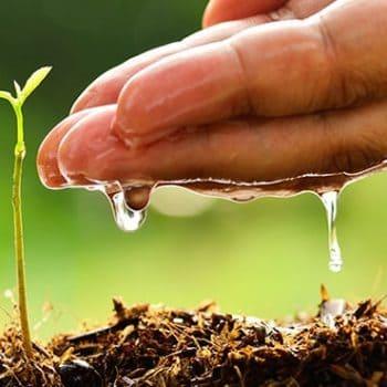 Traducción de horticultura, agricultura y pesca.