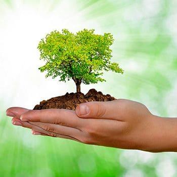 Traducción Medio ambiente